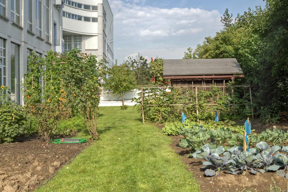 Gemüseanbau auf dem Dach
